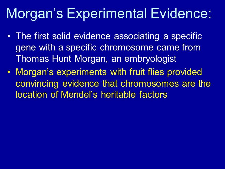 Morgan's Experimental Evidence: