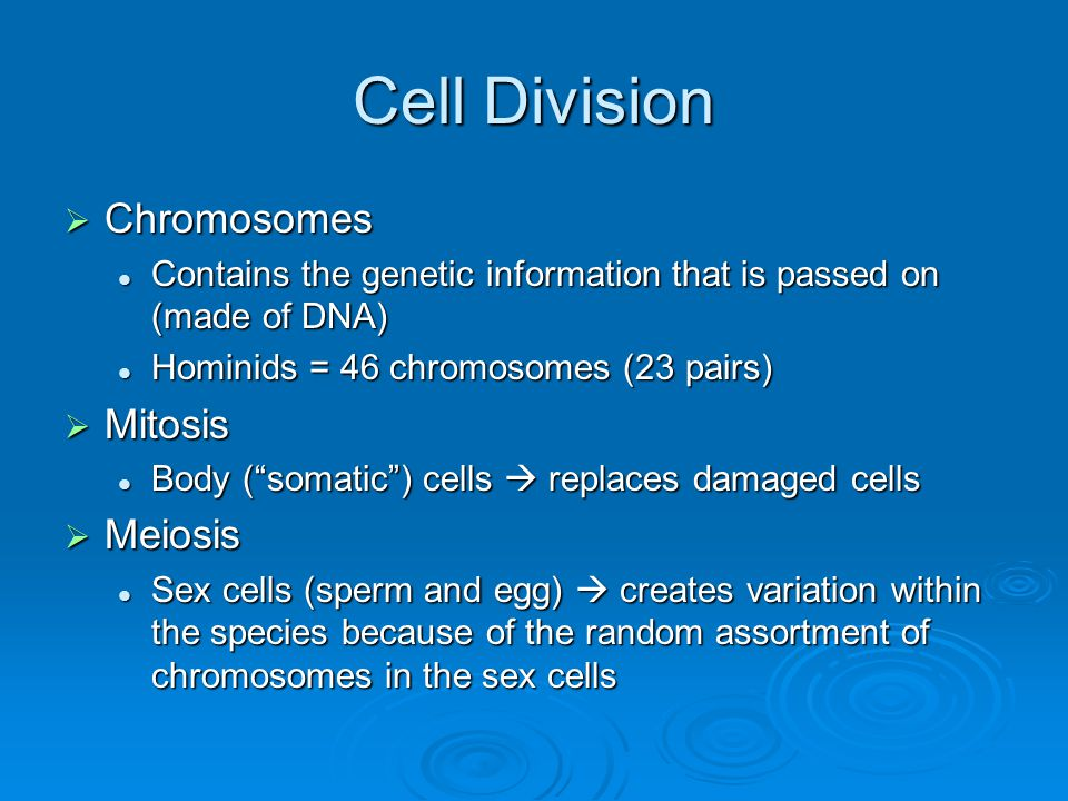 Cell Division Chromosomes Mitosis Meiosis