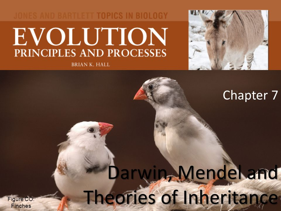 Chapter 7 Darwin, Mendel and Theories of Inheritance