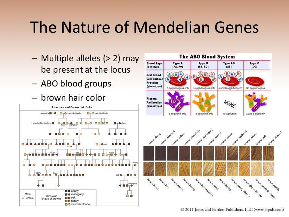 The Nature of Mendelian Genes