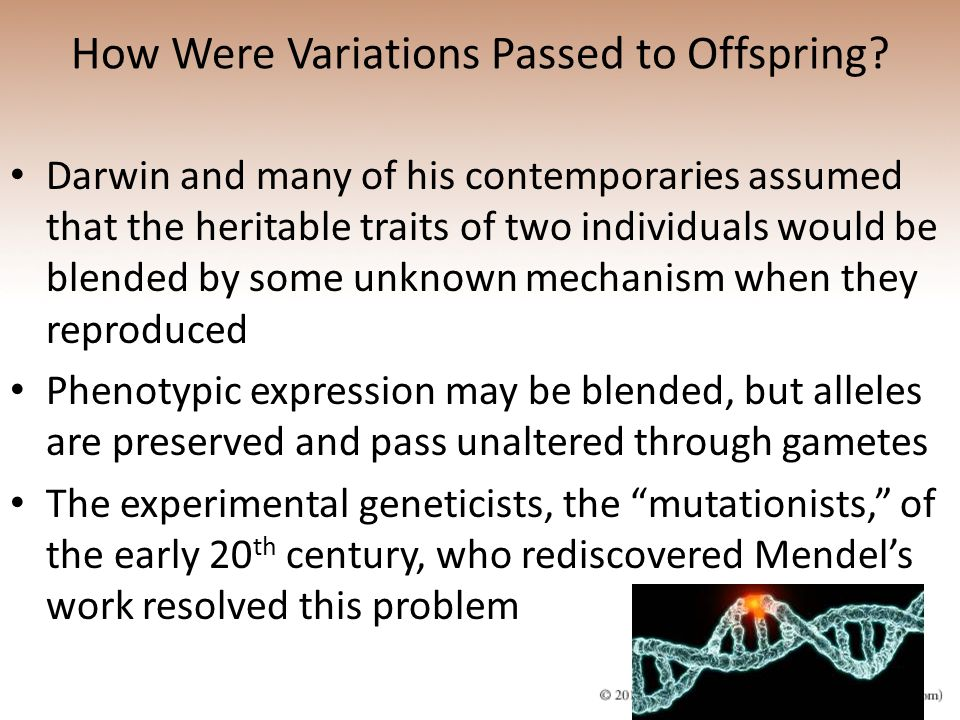 How Were Variations Passed to Offspring