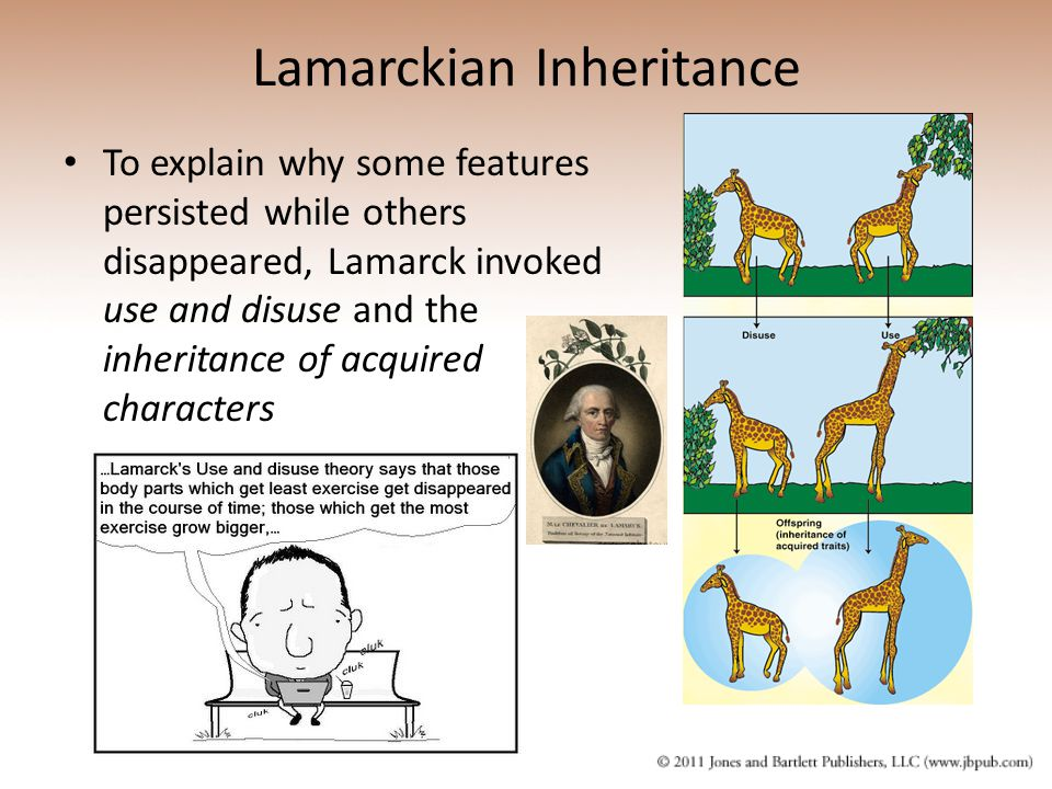 Lamarckian Inheritance