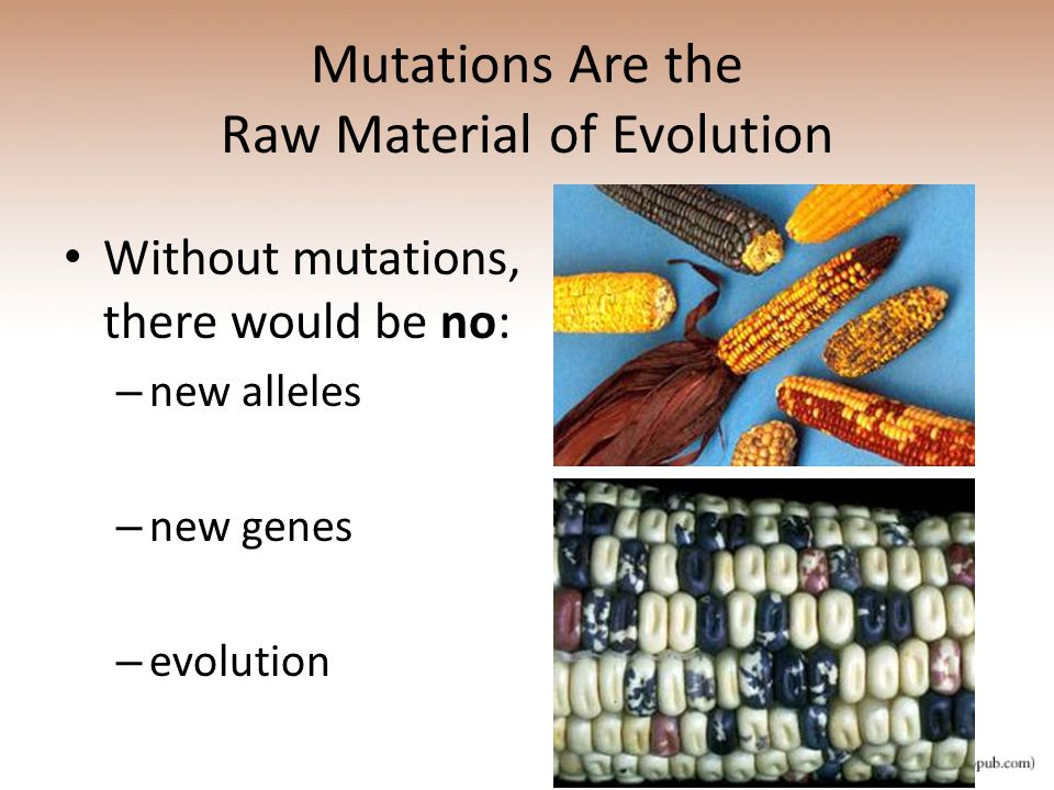 Mutations Are the Raw Material of Evolution
