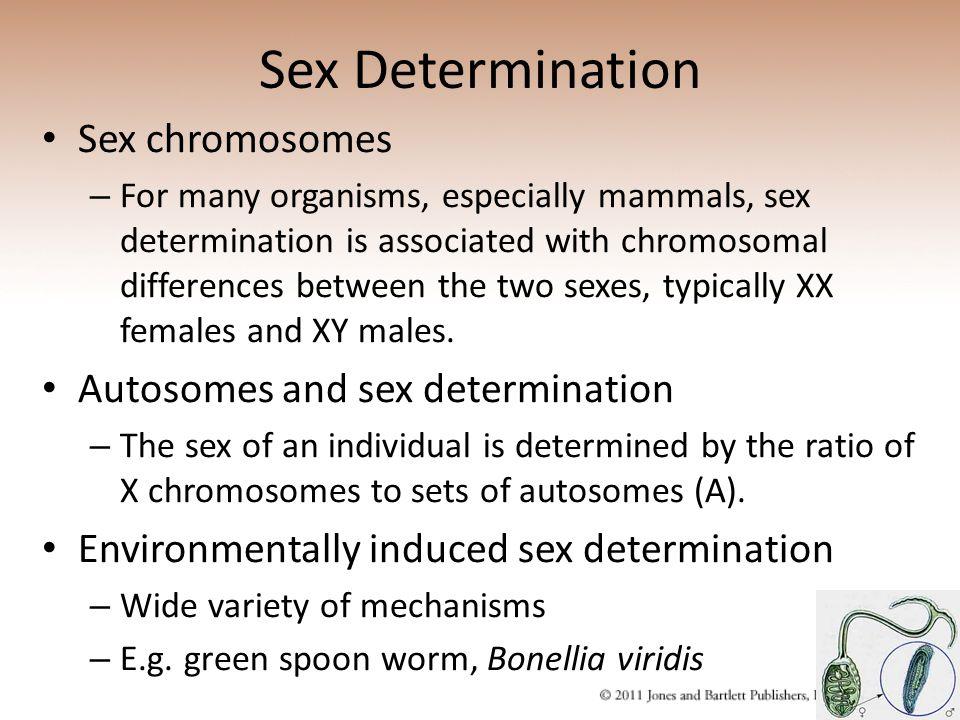 Sex Determination Sex chromosomes Autosomes and sex determination