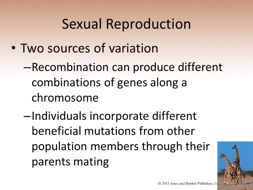 Sexual Reproduction Two sources of variation