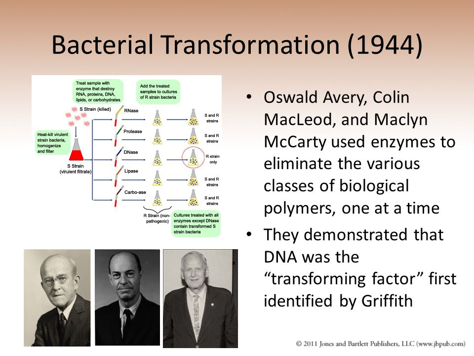 Bacterial Transformation (1944)