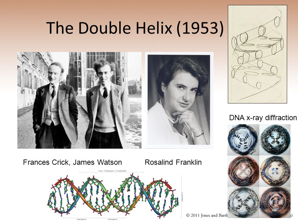 The Double Helix (1953) DNA x-ray diffraction