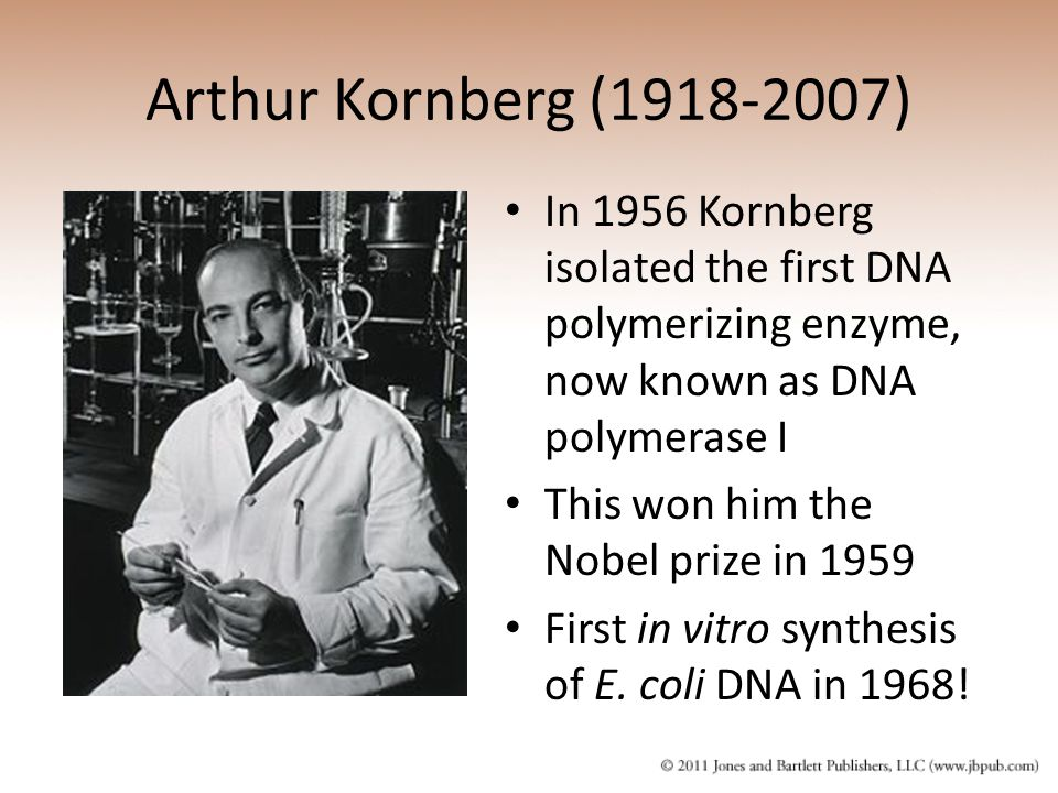 Arthur Kornberg (1918-2007) In 1956 Kornberg isolated the first DNA polymerizing enzyme, now known as DNA polymerase I.