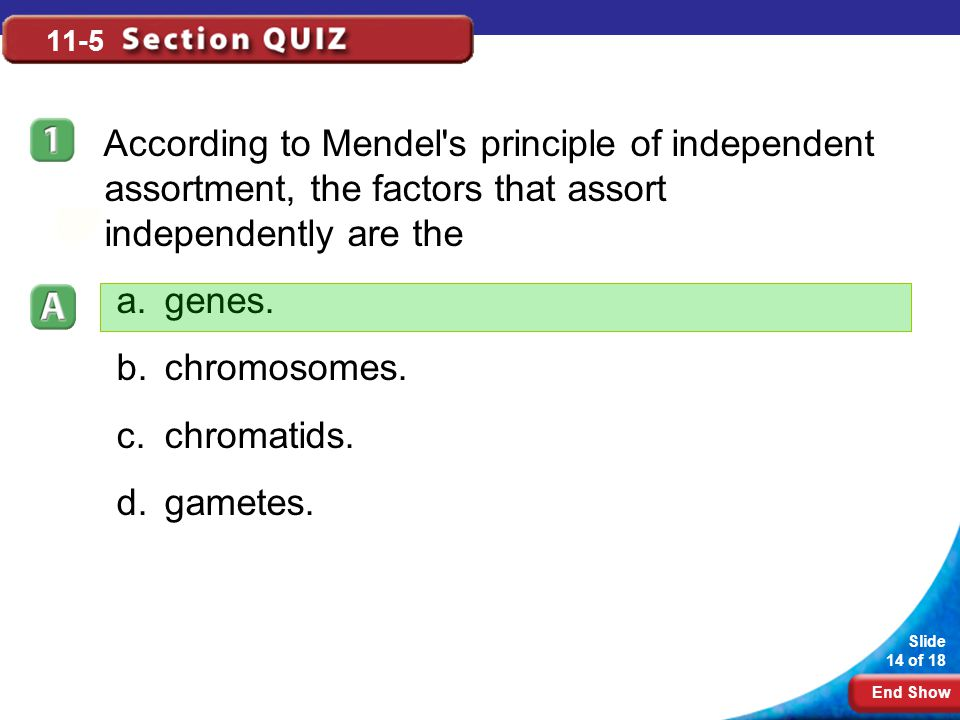 11-5 According to Mendel s principle of independent assortment, the factors that assort independently are the.