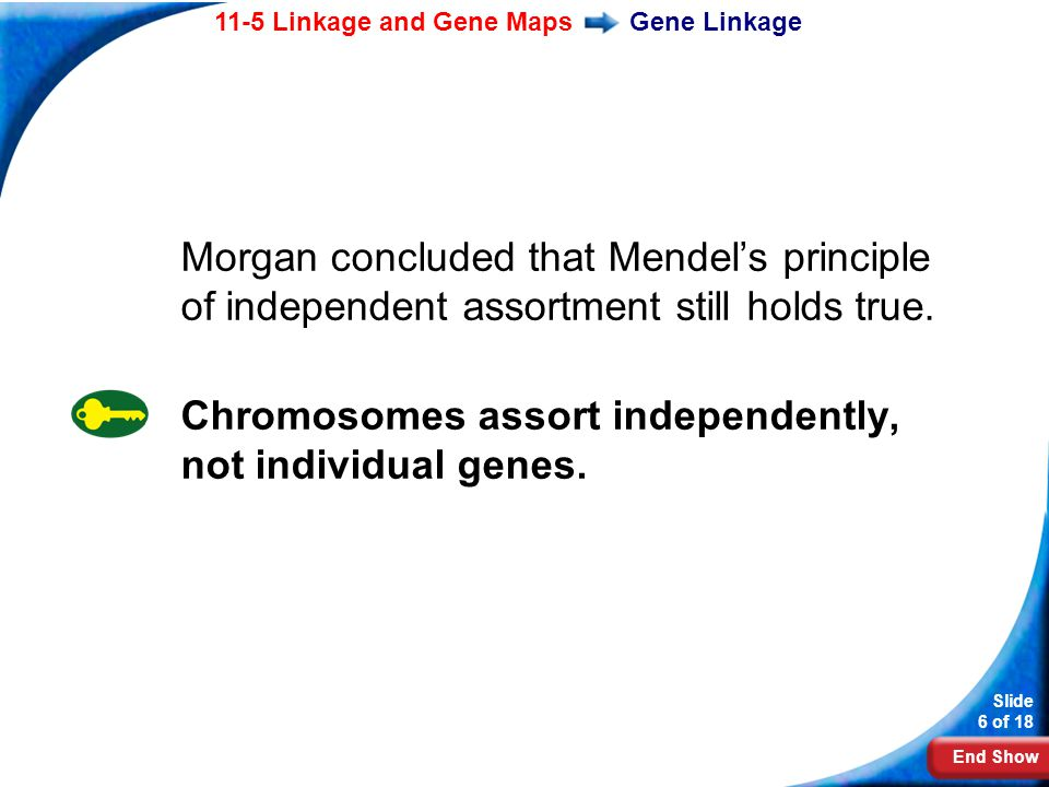 Chromosomes assort independently, not individual genes.