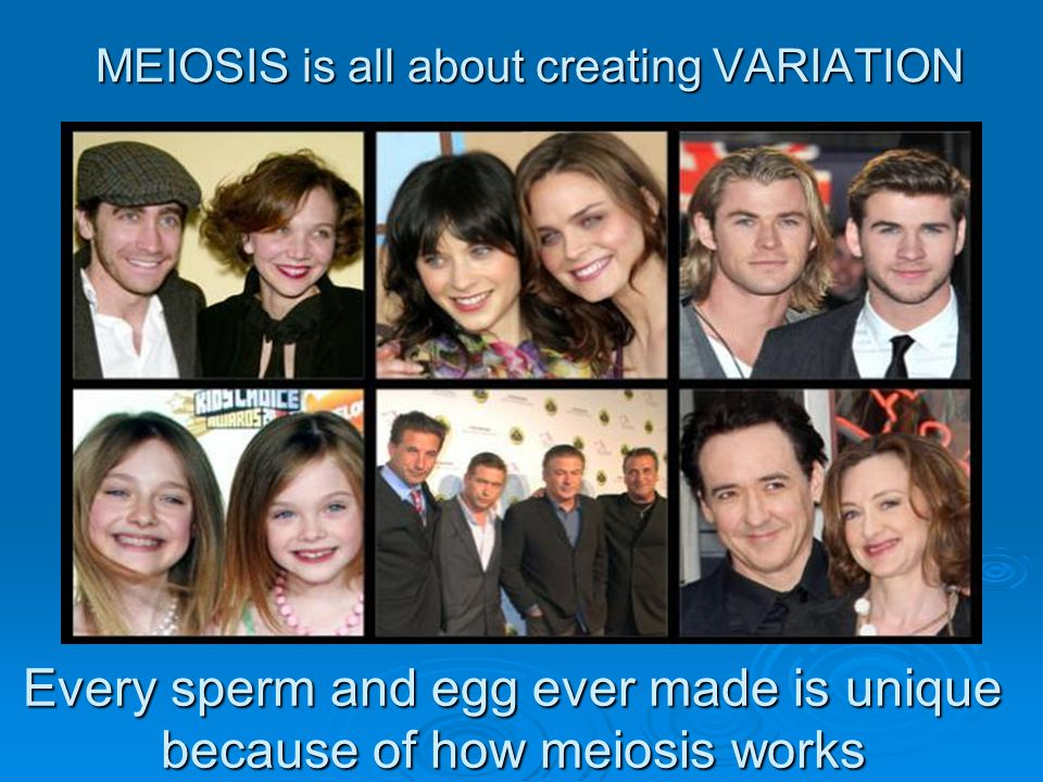 MEIOSIS is all about creating VARIATION