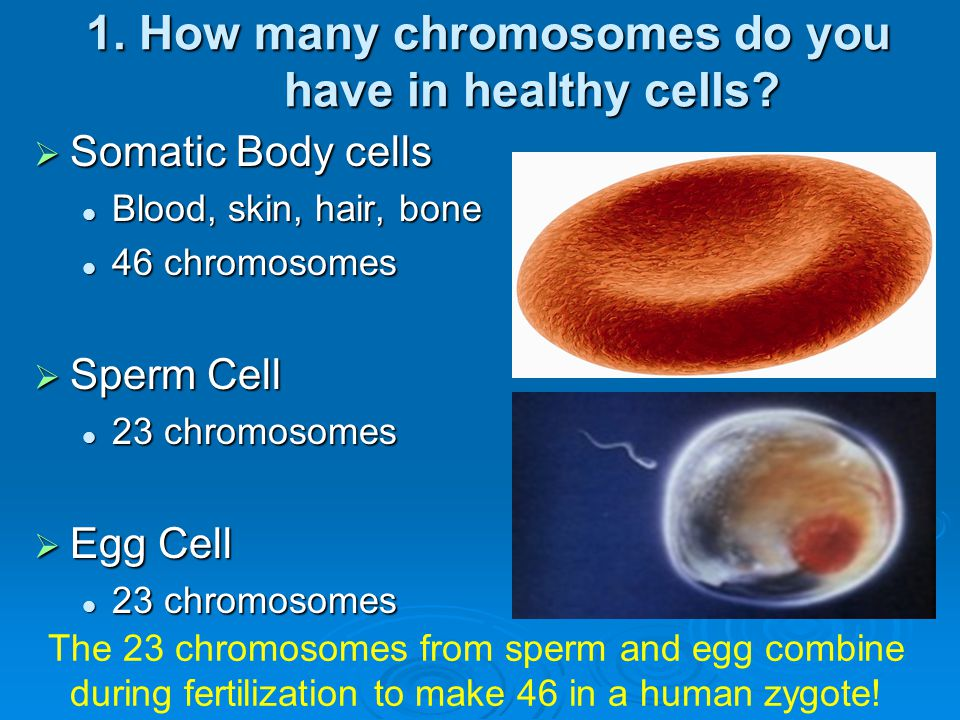 1. How many chromosomes do you have in healthy cells