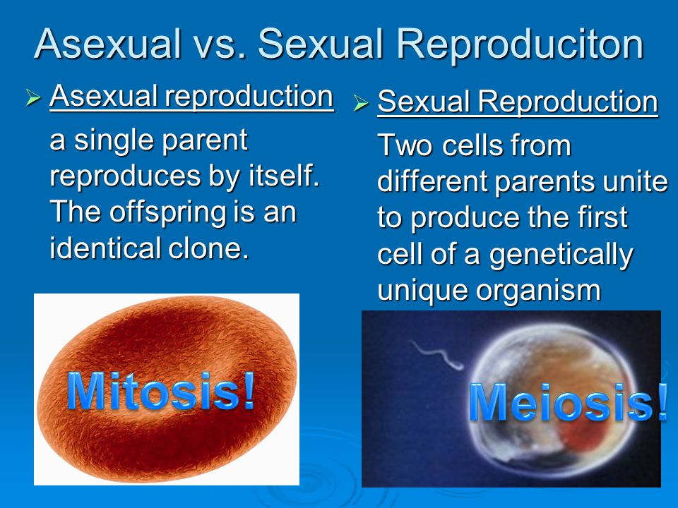 Asexual vs. Sexual Reproduciton
