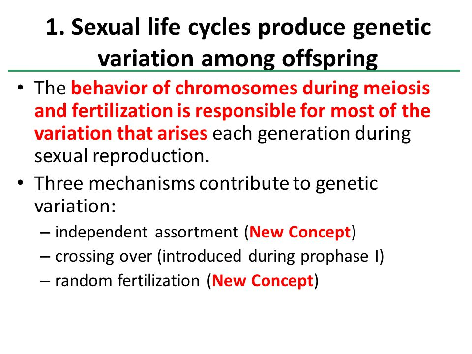 1. Sexual life cycles produce genetic variation among offspring