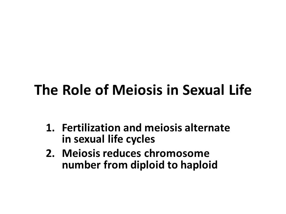 The Role of Meiosis in Sexual Life