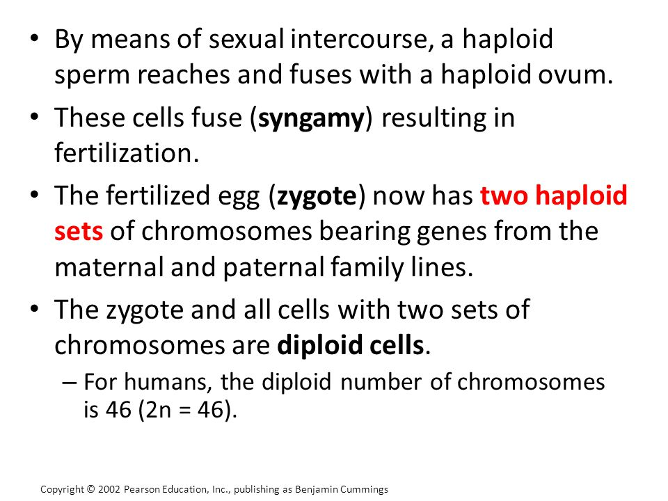 These cells fuse (syngamy) resulting in fertilization.