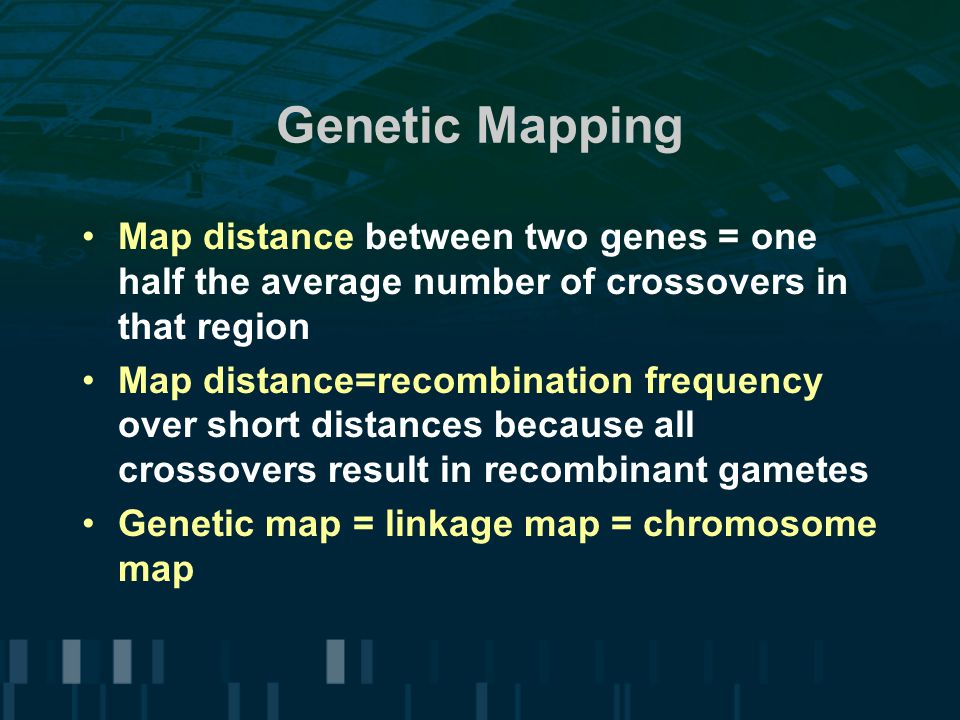 Genetic Mapping Map distance between two genes = one half the average number of crossovers in that region.