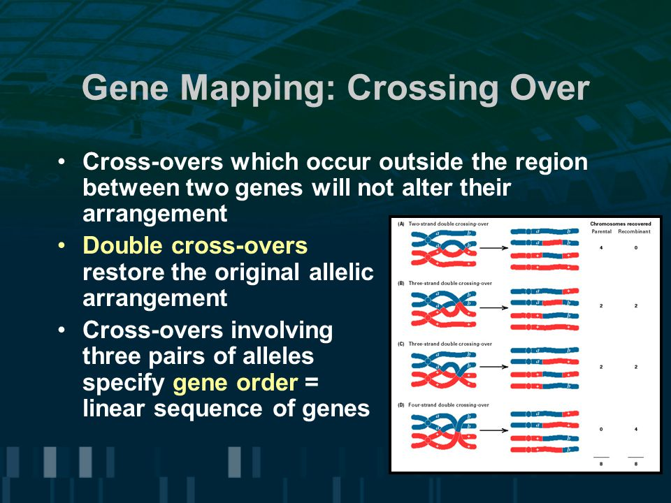 Gene Mapping: Crossing Over