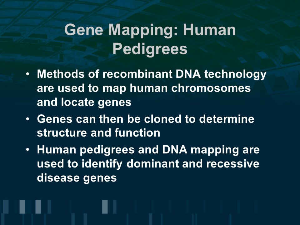 Gene Mapping: Human Pedigrees