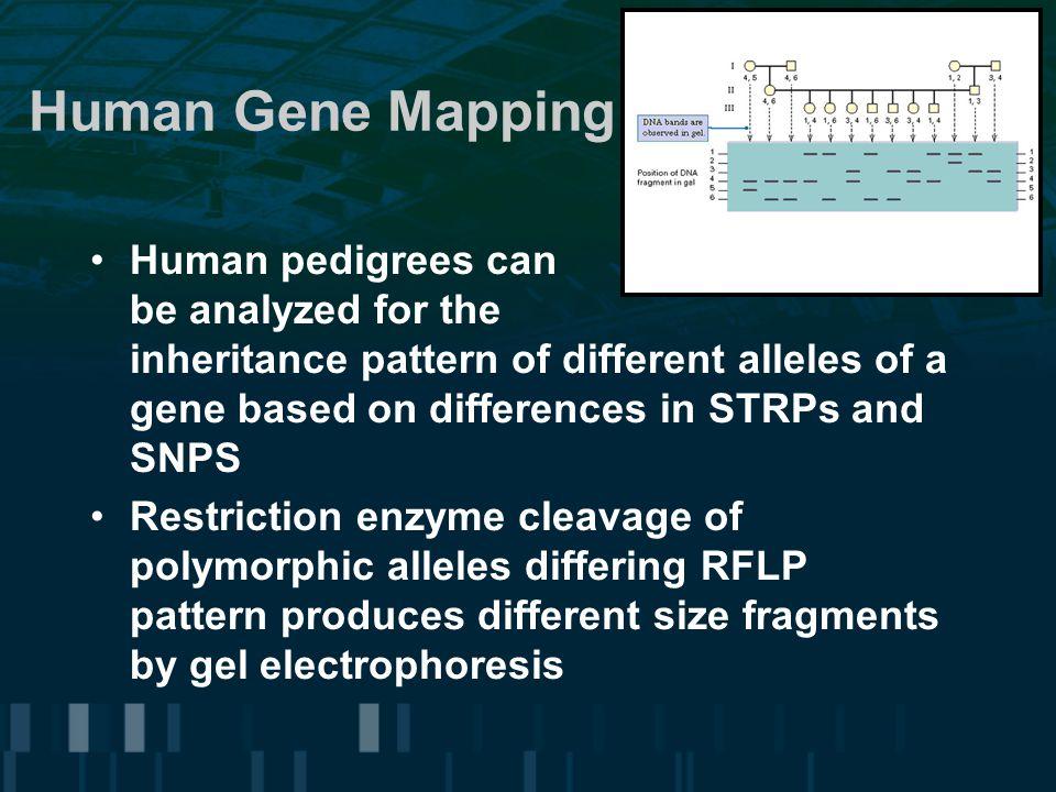 Human Gene Mapping