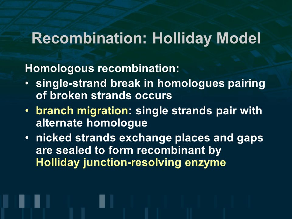 Recombination: Holliday Model