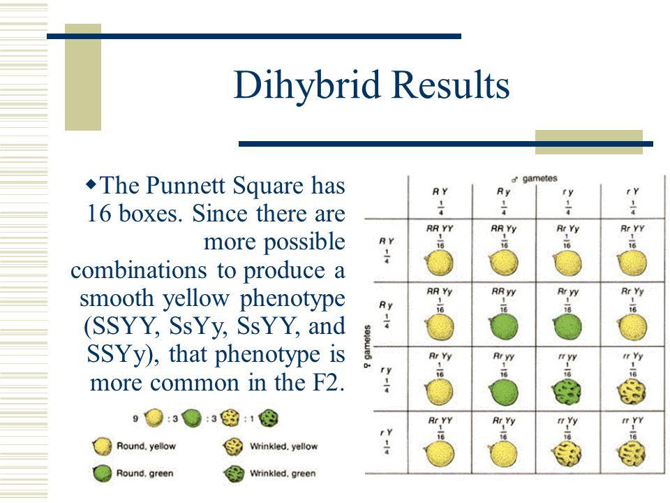 Dihybrid Results