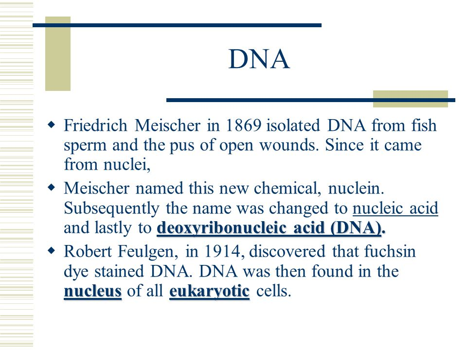 DNA Friedrich Meischer in 1869 isolated DNA from fish sperm and the pus of open wounds. Since it came from nuclei,
