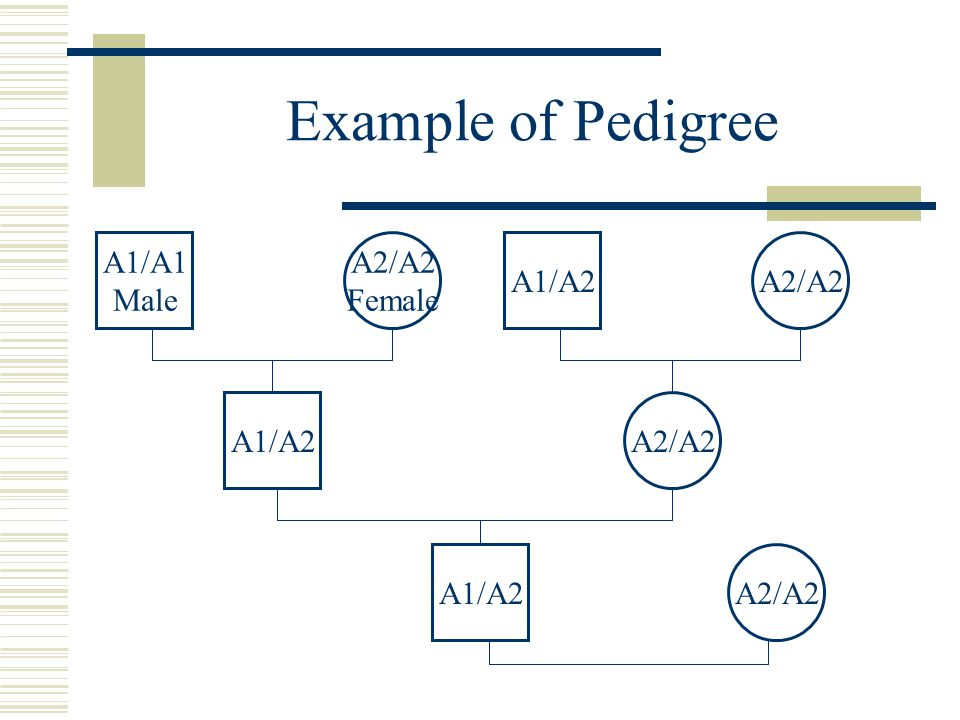 Example of Pedigree A2/A2 A1/A2 Female A1/A1 Male