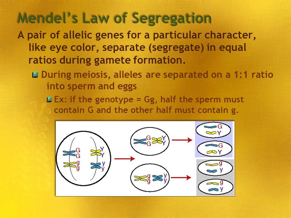 Mendel's Law of Segregation
