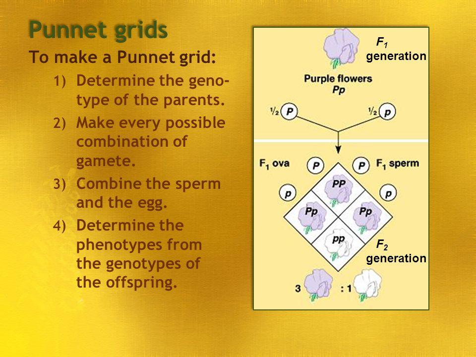 Punnet grids To make a Punnet grid: