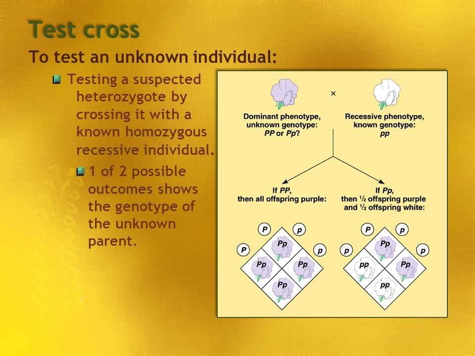 Test cross To test an unknown individual: