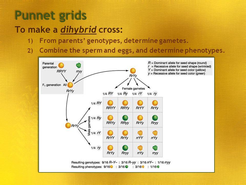 Punnet grids To make a dihybrid cross: