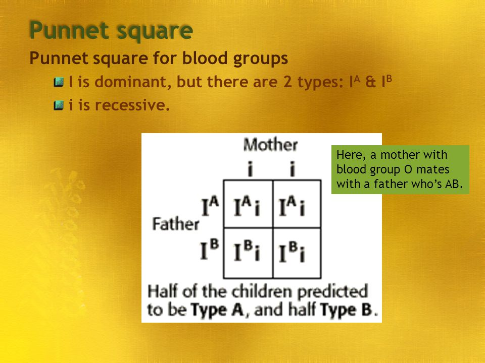 Punnet square Punnet square for blood groups