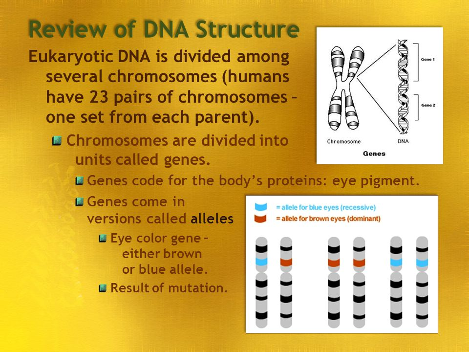 Review of DNA Structure