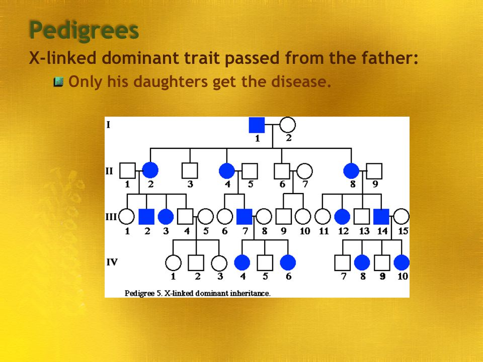 Pedigrees X-linked dominant trait passed from the father: