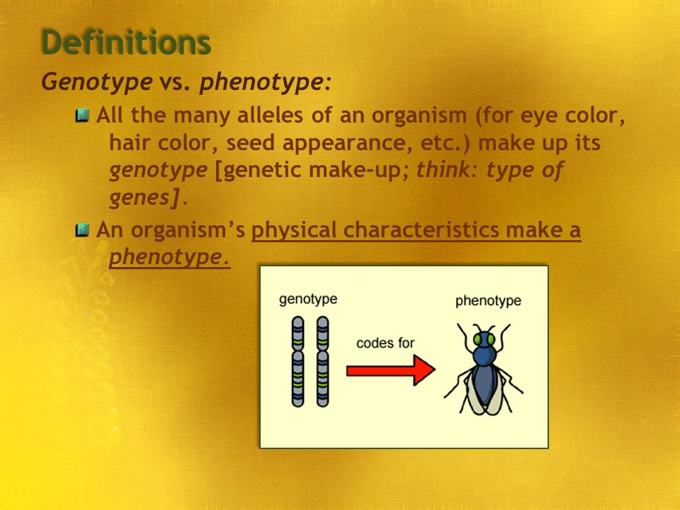 Definitions Genotype vs. phenotype: