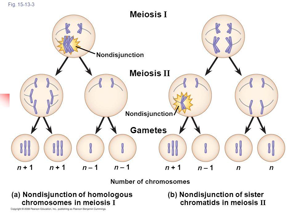 Meiosis I Meiosis II Gametes (a) Nondisjunction of homologous