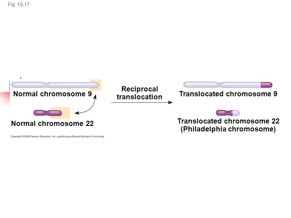 Translocated chromosome 22 (Philadelphia chromosome)