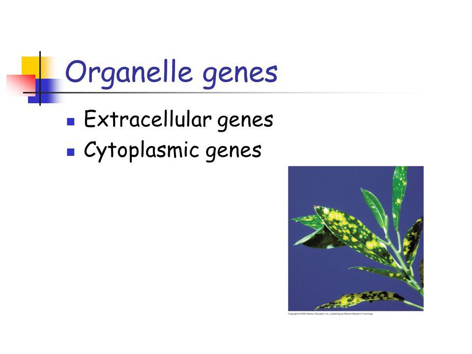 Organelle genes Extracellular genes Cytoplasmic genes