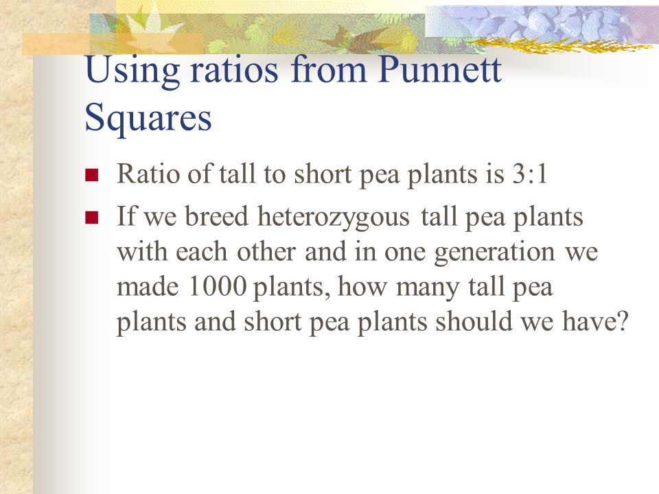 Using ratios from Punnett Squares