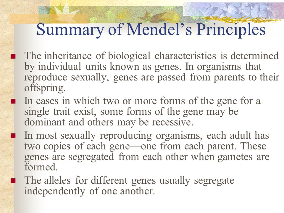 Summary of Mendel's Principles