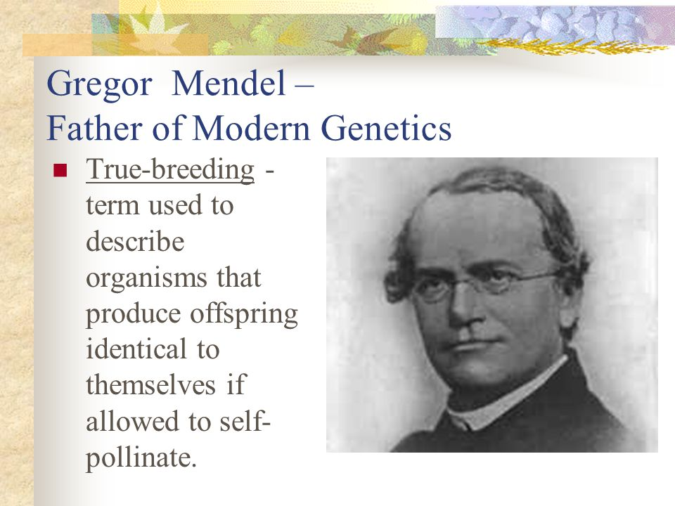 Gregor Mendel – Father of Modern Genetics