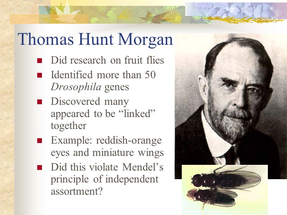 Thomas Hunt Morgan Did research on fruit flies
