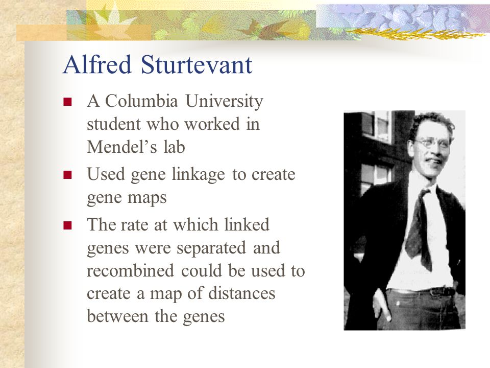 Alfred Sturtevant A Columbia University student who worked in Mendel's lab. Used gene linkage to create gene maps.