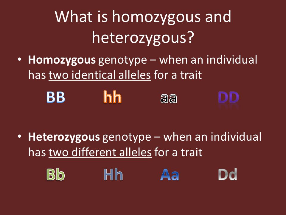 What is homozygous and heterozygous