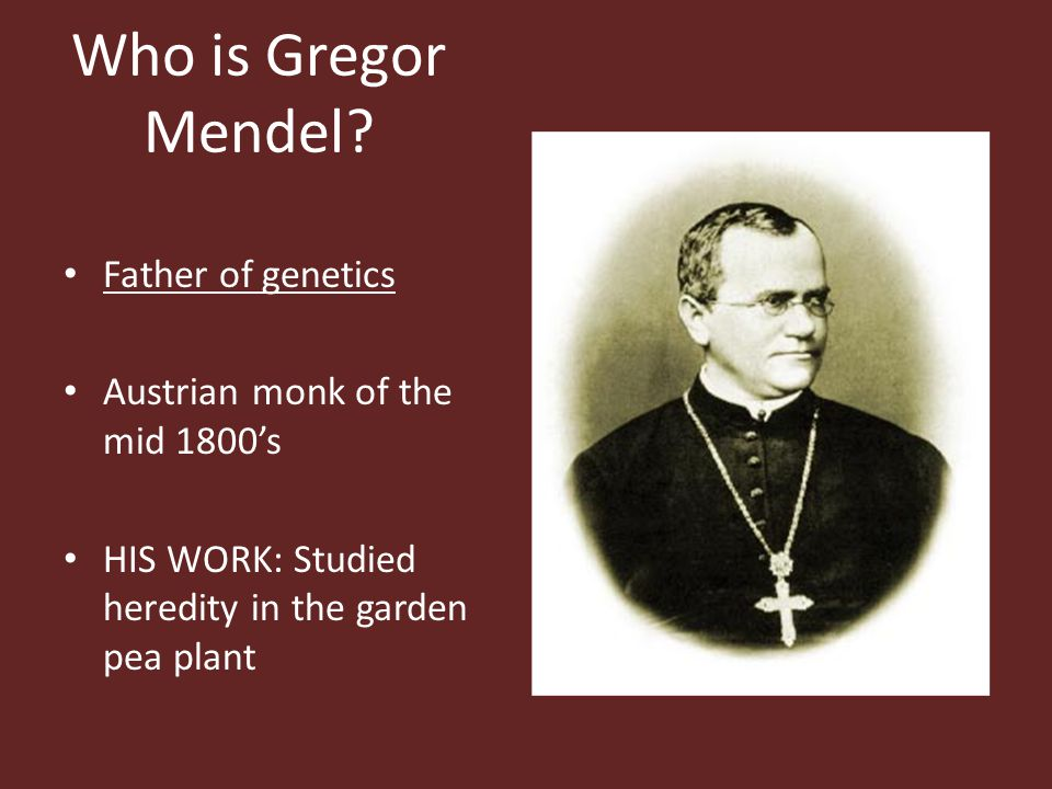 Who is Gregor Mendel Father of genetics