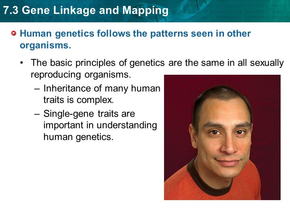 Human genetics follows the patterns seen in other organisms.