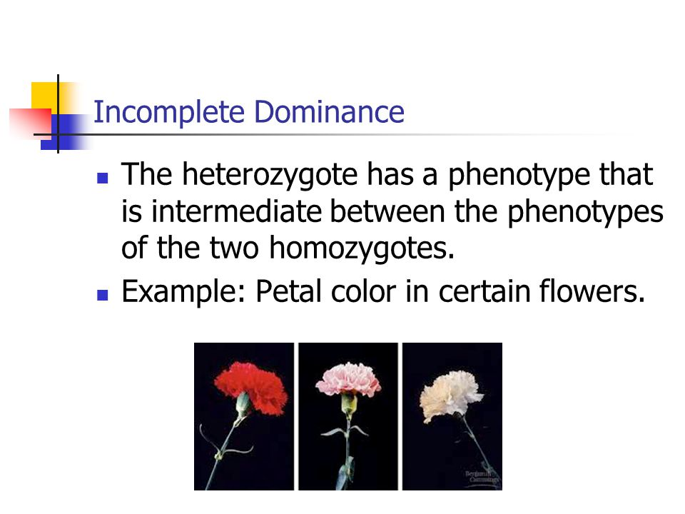 Incomplete Dominance The heterozygote has a phenotype that is intermediate between the phenotypes of the two homozygotes.