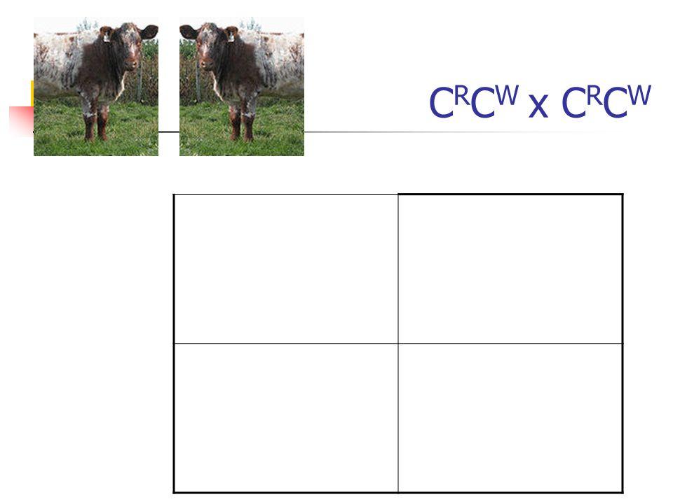 CRCW x CRCW
