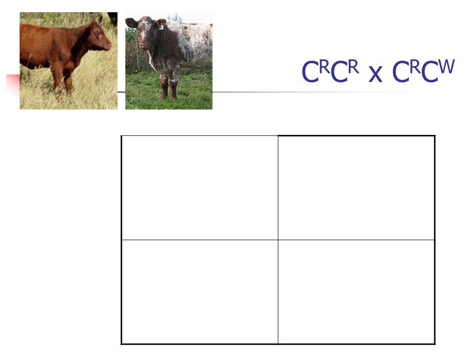 CRCR x CRCW